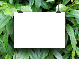 One hanged horizontal paper sheet frame with clips on green leaves background