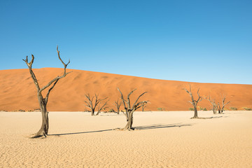 Dry trees in desert crater area at Deadvlei in Sossusvlei territory - Namibian world famous desert - African nature wonder with unique wild landscape in Namibia near South Africa