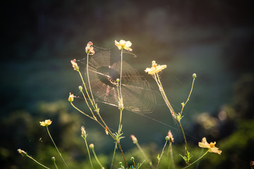 Spiderweb sunset