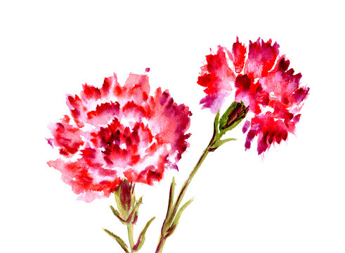 Watercolor red flower carnation