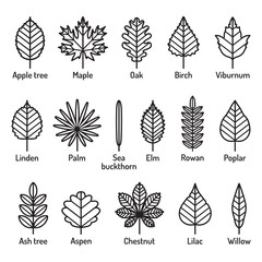 Leaves types with names icons vector set. Outline black icons.
