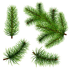 Set of realistic fir branches