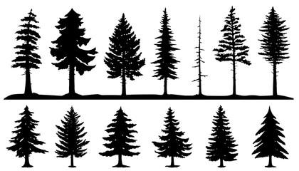 Fototapeta conifer tree silhouettes obraz