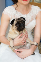 dog in the bride's hands