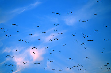 Blue sky migrating birds