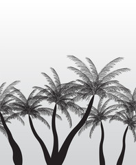 Seamless Pattern Palm Silhouette. Vector Illustration.