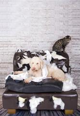 Hund und Katze auf zerstörter Couch