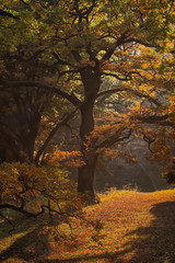 Picturesque autumn oak grove