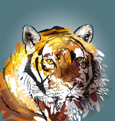 Colorful vector illustration head tiger