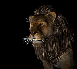 Angry Lion at black background