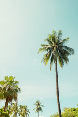 Vintage nature background of coconut palm tree on tropical beach blue sky with sunlight