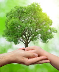 Child and male hands holding a tree on green natural background