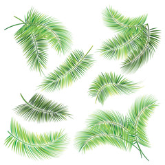 Set of palm tree branches.