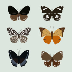 collection of realistic butterfies, animal vector illustration,