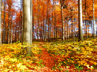 color photography of autumnal forest
