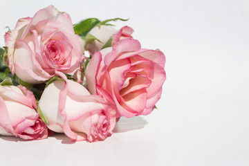 bouquet pink roses on white background