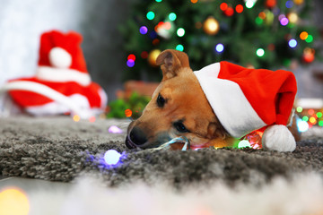 Small cute funny dog playing with garland in Santa hat on Christmas background