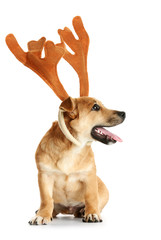 Small funny cute dog with deer horns, isolated on white