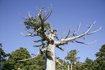 An image of Yakushima