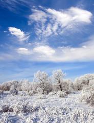 Winter forest. Cloudscape