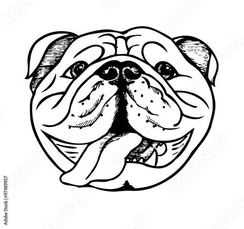 "english bulldog, vector illustration"" stock image and royalty-free"