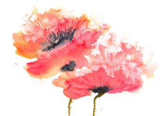 Red poppies, watercolor painting