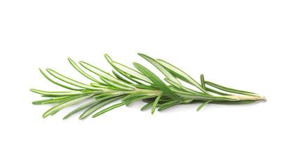 Веточка свежего зеленого розмарина изолированная на белом фоне