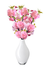 Almond Tree Flowers in vase isolated on white