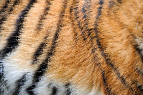 Wall mural Texture of real tiger skin