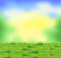 Blurred nature background and green grass