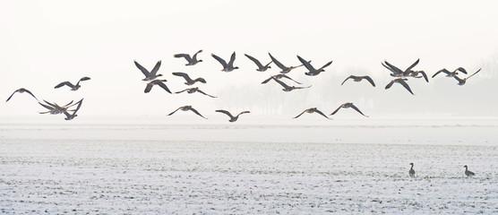 Birds flying over a snowy field in winter