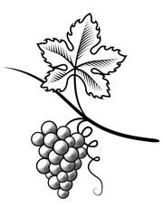 Grapes. Imitation engraving. Vector illustration.