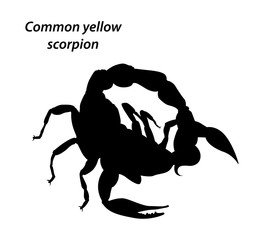 Common yellow scorpion silhouette vector on white background