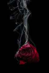 Smoke and Rose. Red rose and smoke on black background.