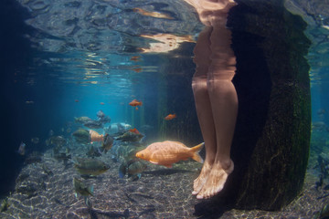 Underwater picture of legs of young woman relaxing in spa pool with gold koi fishes swimming in fresh blue water. Garden pond background, people lifestyle, travels in Asia and Bali on summer vacation.
