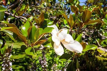 Деревья и цветы в Испанском городе Аранхуэс