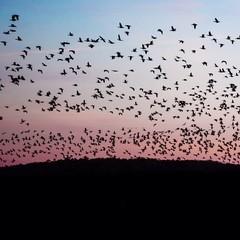 Lots of Birdies