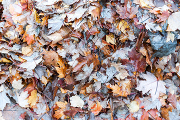 A pile of autumn leaves, ready for kicking through