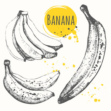 Set of hand drawn banana. Black and white sketch food.