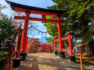 Fototapete - Torii gate to chureito pagoda in autumn, Fujiyoshida, Japan