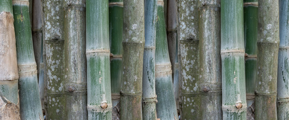 Green bamboo wall texture background