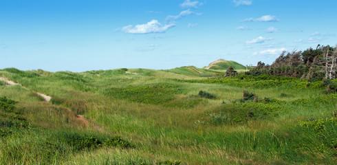 Green grass on field, Prince Edward Island, Canada