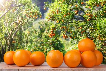 Fresh orange on wood table in garden