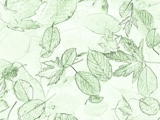 light background texture with various green leaves
