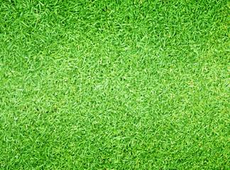 Tuinposter Gras Golf Courses green lawn