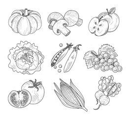 Fruit and Vegetables, Handdrawn Vector Illustration