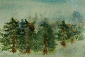 Pine forest on winter season with snow fall