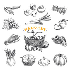 Vector hand drawn sketch Harvest set.