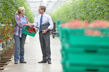 Businessman and grower with crate of ripe tomatoes handshaking in greenhouse