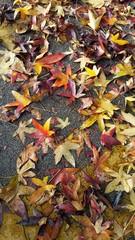 Tappeto di foglie colorate